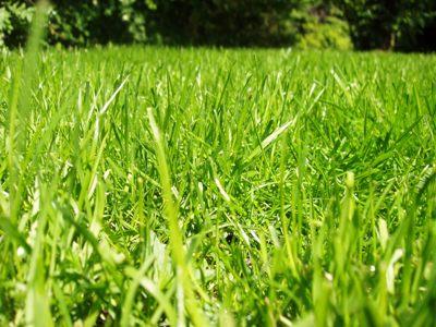 Jarní regenerační péče pro vaši zahradu
